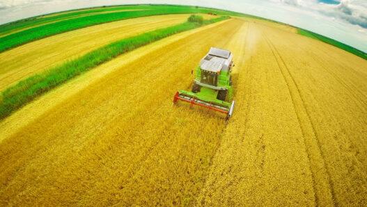 Inclusive skills for enterprise development in agribusiness